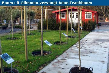 Anne Franks boom2.jpg