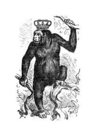 Koning Gorilla